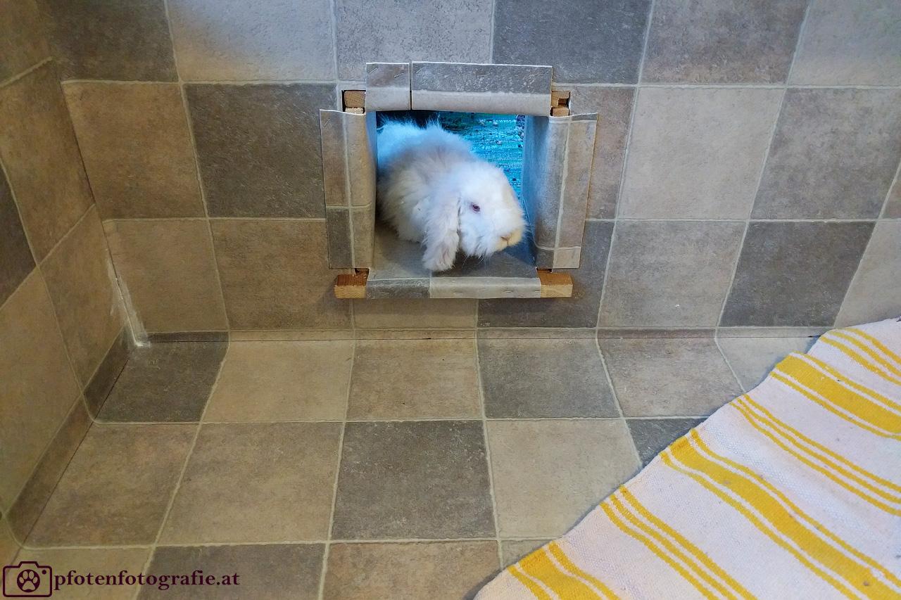 HOPPLI – Das Kaninchengehege für IKEA Freunde